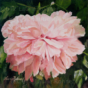 Peony Oil Painting by Nature Artist Laurie Rohner